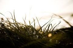 Gras im Herbst Lizenzfreies Stockfoto