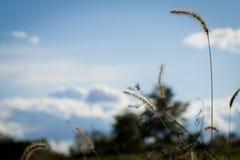 Gras im Himmel stockbild