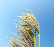 Gras im Himmel lizenzfreie stockfotografie
