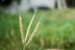 Gras im Hinterhof Lizenzfreie Stockfotografie