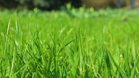 Gras im Park mikrokosmos Lizenzfreie Stockbilder