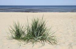 Gras im Sand. Stockfoto