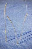 Gras im Schnee Lizenzfreie Stockfotos
