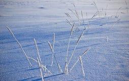 Gras im Schnee Stockfotos