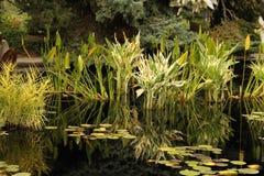 Gras im Seewasser Stockfotos