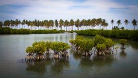 Gras im Seewasser Stockfotografie
