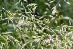 Gras im Sommer Stockfotografie