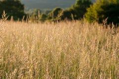 Gras im Sommer stockbilder