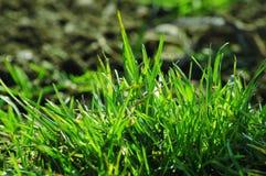 Gras im Sonnenlicht Stockfoto