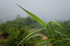 Gras im Tal Stockbild
