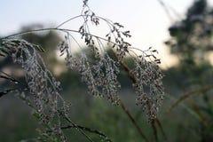 Gras im Tau Stockfotografie