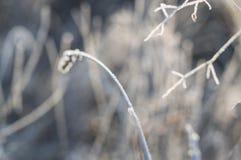 Gras im tiefen Winterfrost Stockfotos