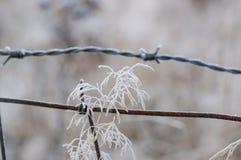 Gras im tiefen Winterfrost mit Widerhakendraht Stockfoto