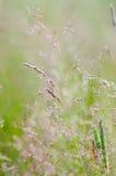 Gras im Unschärfenhintergrund Lizenzfreie Stockbilder