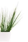 Gras im Vase Stockfotografie