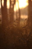 Gras im Wald Stockfotos