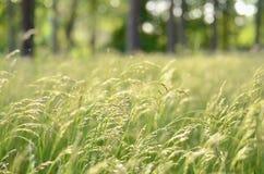 Gras im Wald Stockbild