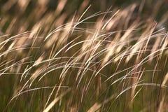 Gras im Wind lizenzfreie stockfotos