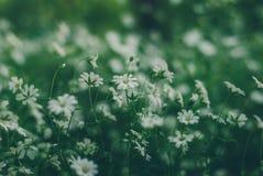 Gras ist ein Kraut Lizenzfreies Stockbild