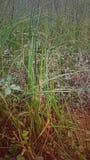 Gras ist grüner lizenzfreies stockfoto