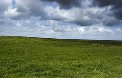 gras krajobrazu Zdjęcia Royalty Free