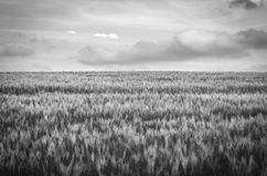 Gras landscape with clouds in black and white. A gras landscape with clouds in black and white Royalty Free Stock Photography