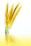 Gras lokalisiert auf weißem Hintergrund Stockfoto