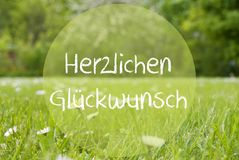 Gras Meadow, Daisy Flowers, Herzlichen Glueckwunsch Means Congratulations Royalty Free Stock Photos