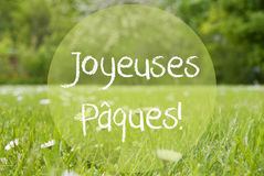 Gras Meadow, Daisy Flowers, Joyeuses Paques Means Happy Easter Stock Image