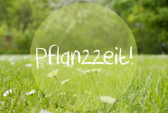 Gras Meadow, Daisy Flowers, Pflanzzeit Means Planting Season Royalty Free Stock Photos