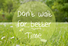 Gras Meadow, Daisy Flowers, Quote Dont Wait For Better Time Royalty Free Stock Photography