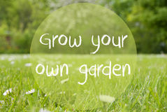 Gras Meadow, Daisy Flowers, Quote Grow Your Own Garden Royalty Free Stock Image