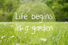 Gras Meadow, Daisy Flowers, Quote Life Begins In A Garden Stock Image