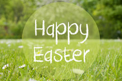 Gras Meadow, Daisy Flowers, Text Happy Easter Stock Images