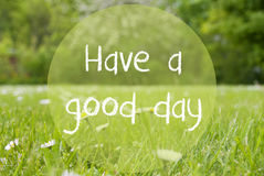 Gras Meadow, Daisy Flowers, Text Have A Good Day Stock Photos