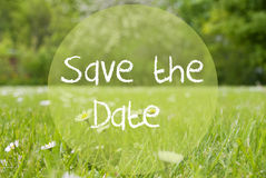 Gras Meadow, Daisy Flowers, Text Save The Date Royalty Free Stock Images
