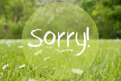 Gras Meadow, Daisy Flowers, Text Sorry Stock Photography