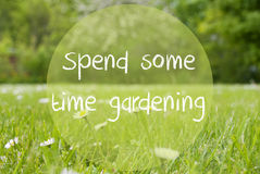 Gras Meadow, Daisy Flowers, Text Spend Some Time Gardening. English Text Spend Some Time Gardening. Spring Or Summer Gras Meadow With Daisy Flowers. Blurry Trees Royalty Free Stock Images