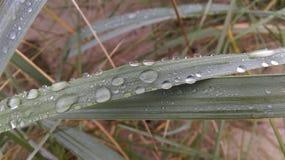 Gras med regnvatten Fotografering för Bildbyråer