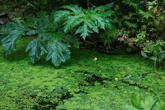 Gras in meerwater Royalty-vrije Stock Fotografie