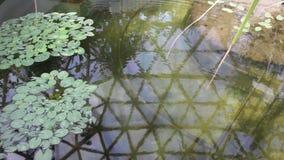 Gras in meerwater stock footage