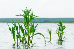 Gras in meerwater royalty-vrije stock foto's