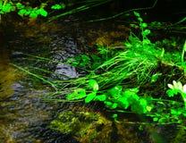 Gras in meerwater stock foto's