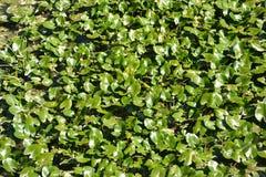 Gras in meerwater Stock Afbeelding