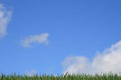 Gras met Blauwe Hemel Royalty-vrije Stock Foto's