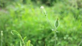 Gras met bloem stock footage