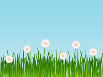 Gras met bloemen Royalty-vrije Stock Afbeelding