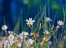 Gras met bloemen Stock Afbeeldingen
