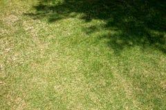 Gras met boomschaduw Stock Fotografie