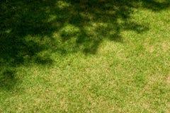 Gras met boomschaduw Royalty-vrije Stock Afbeeldingen